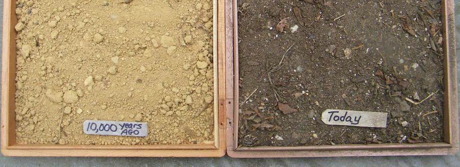 soil-head
